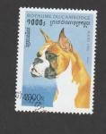Sellos de Asia - Camboya -  Perros de raza: Boxer