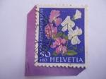 Sellos de Europa - Suiza -  Pro Juventute 1959 - Guisante de olor (Lathyrus Odoratus) - (Sweet Pea) Serie:Flores del Jardín,Karl