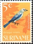 Sellos del Mundo : America : Surinam : AVES.  TANAGER  AZUL  GRISÁSEO.