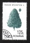 Sellos de Europa - Rumania -  Árboles, Haya Común (Fagus sylvatica)