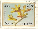 Sellos del Mundo : Asia : Emiratos_Árabes_Unidos : Fujeira. Criaturas marinas. Acropora Prolifera.