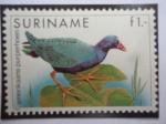 Sellos del Mundo : America : Surinam : Gallinule Púrpura Americano - Sello Postal, pájaro.