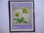 Sellos de Asia - Omán -  Sultanate of Omán - Dionysia Mira. (Crece en las grietas de las Rocas)