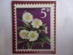 Sellos de Oceania - Nueva Zelanda -  Flores MatuaTikumo, o Margarita de Montaña- -Erythrina Mountain (Celmisiacoriacea daisy)