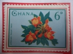 Sellos de Africa - Ghana -  African Tulip Tree - sello de 6 penique de ghana