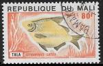 Sellos de Africa - Mali -  peces - Citharinus latus