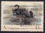 Sellos de Oceania - Australia -  cisnes negros