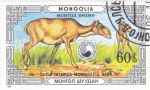 Sellos de Asia - Mongolia -  Saiga mongol (Saiga tatarica)