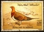de Africa - Marruecos -  Fauna. Pterocles alchata