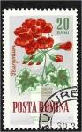 de Europa - Rumania -  Flores de jardín, geranio de manzana (Pelargonium odoratissimum)