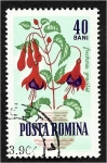 de Europa - Rumania -  Flores de jardín, fucsia (Fuchsia gracilis)
