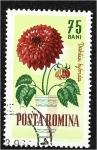 de Europa - Rumania -  Flores de jardín, Dalia (Dahlia hybrida)