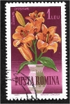 de Europa - Rumania -  Flores de jardín, lirio naranja (Lilium croceum)
