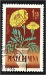 de Europa - Rumania -  Flores de jardín, caléndula francesa (Tagetes erecta)