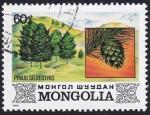 Sellos del Mundo : Asia : Mongolia :  Pinus silvestris