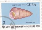 Sellos del Mundo : America : Cuba :  CARACOLA
