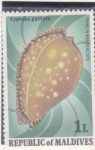sello : Asia : Maldivas : CARACOLA