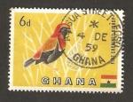 Sellos del Mundo : Africa : Ghana : fauna, pajaro