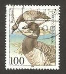 Sellos de Europa - Alemania -  1369 - Protección de la naturaleza, animal marino proteguido, branta bernicla