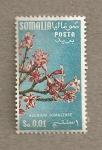 Sellos del Mundo : Africa : Somalia : flor Adenium somaliense