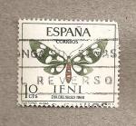 Sellos de Europa - España -  Ifni, Mariposa Syntomis alicia