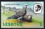 Sellos del Mundo : Africa : Lesotho : Aves. Paloma rocosa. Columba guinea Leeba.