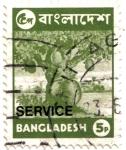 Sellos del Mundo : Asia : Bangladesh : La fruta de Jack